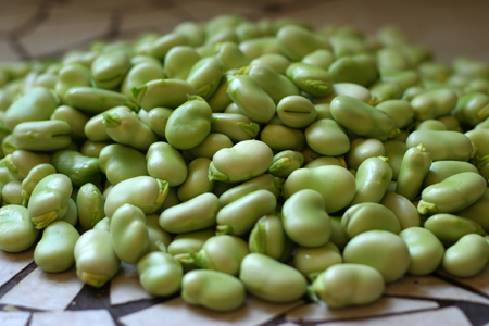 pile of favas 2.jpg