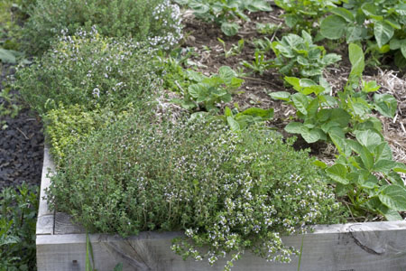 potatoes and thyme 2.jpg