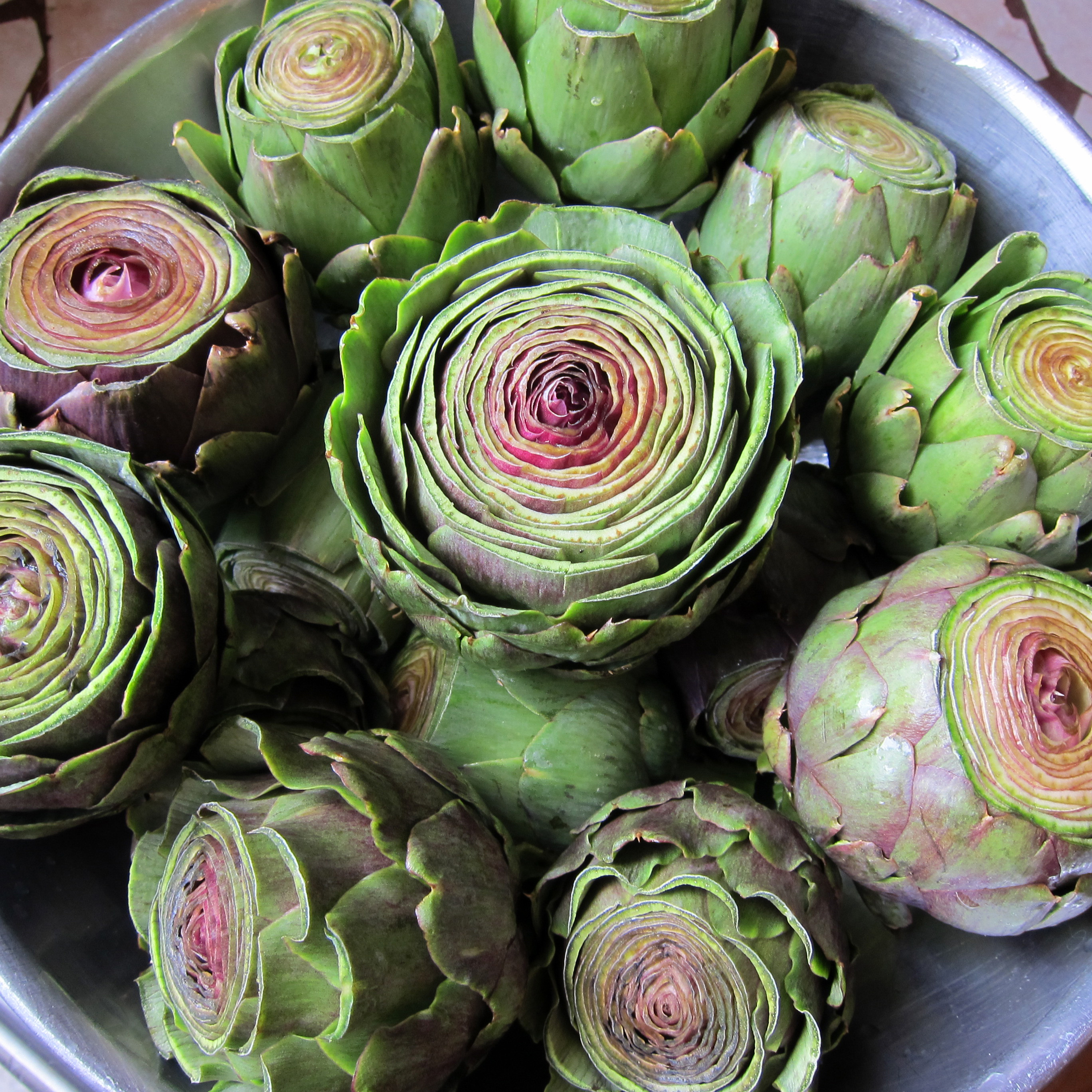 artichokes from the garden
