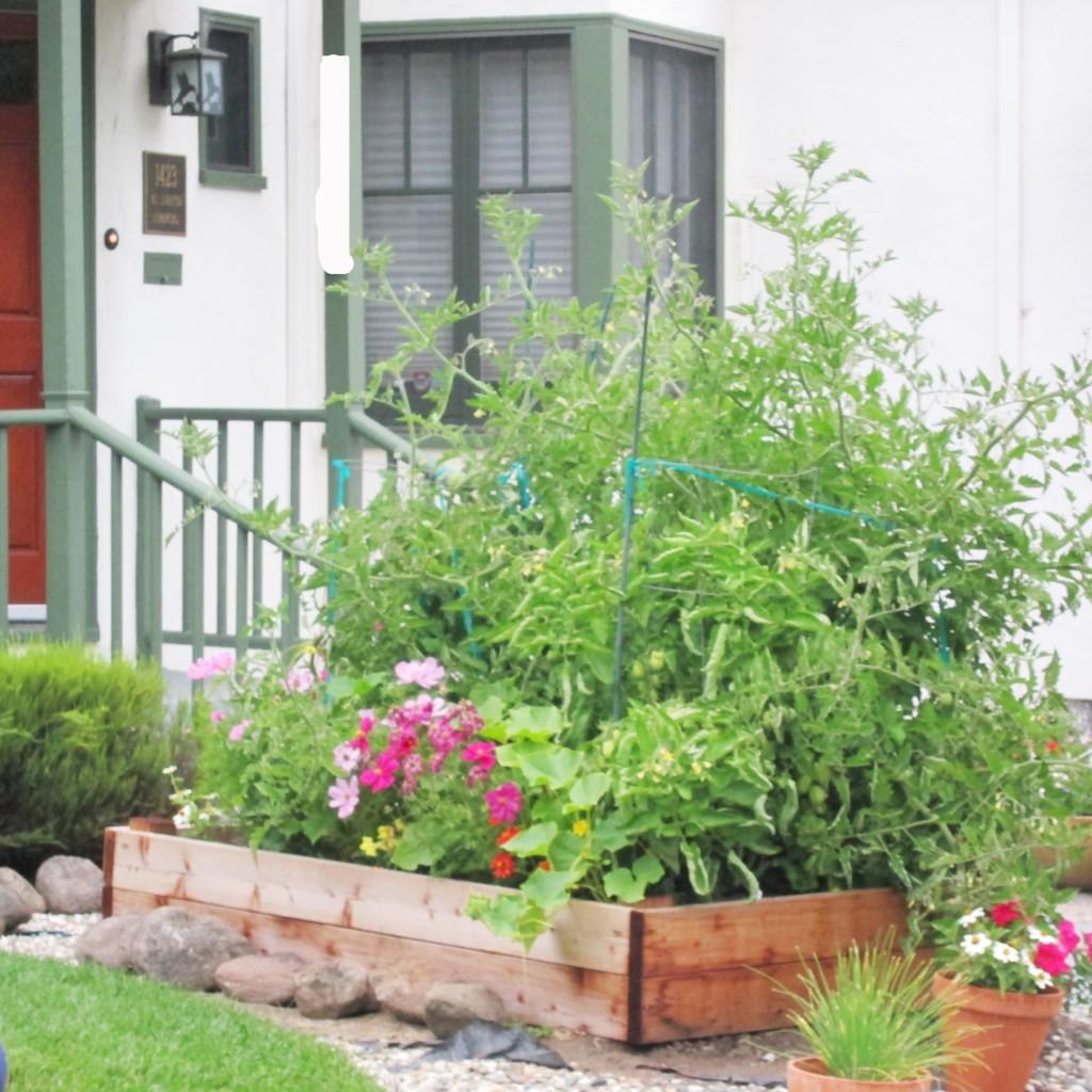 front yard veg box