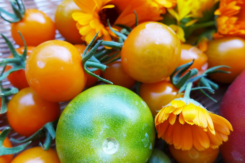 tomatoes and calendula